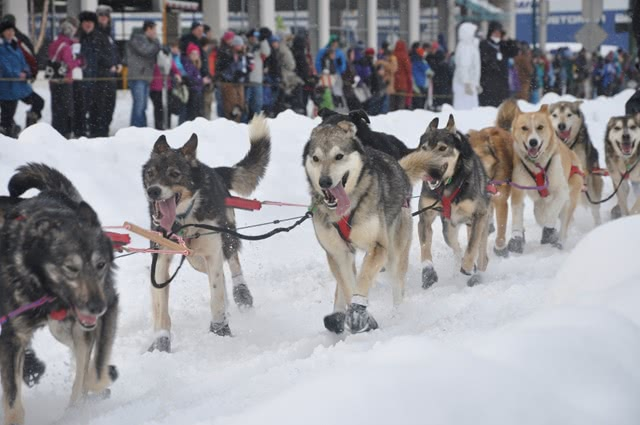Iditarod: The Last Great Race on Earth